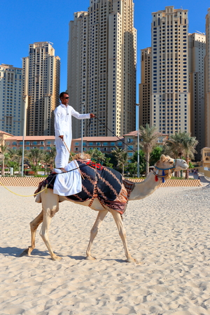 high rise buildings: DUBAI, UAE - NOVEMBER 11, 2013: High rise buildings and man riding a camel on the beach