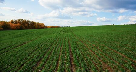 field crop: Agricultural fields and meadows in Europe Stock Photo