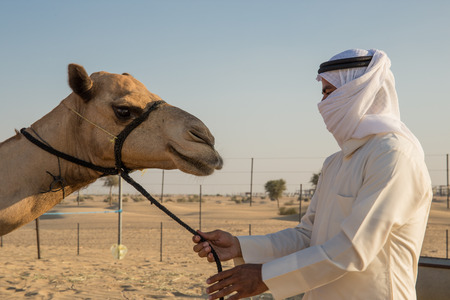 east riding: Arab man and camel on the farm