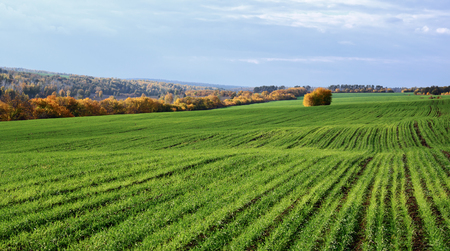 agriculture landscape: Agricultural fields and meadows in Europe Stock Photo