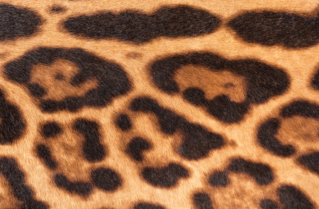 faux: Faux leopard fur texture background