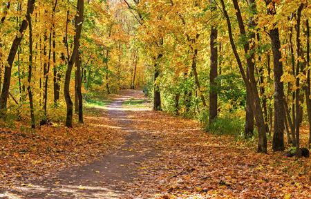 pathway: Pathway in the autumn forest