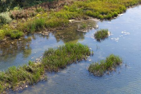 thickets: Riverfront and thickets in water Stock Photo