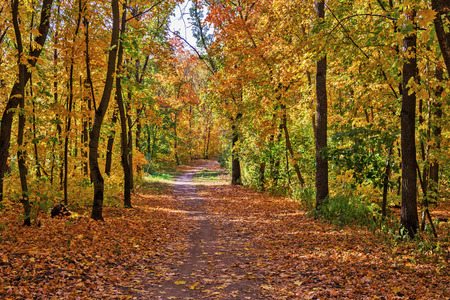 footway: Footpath in the autumn forest Stock Photo