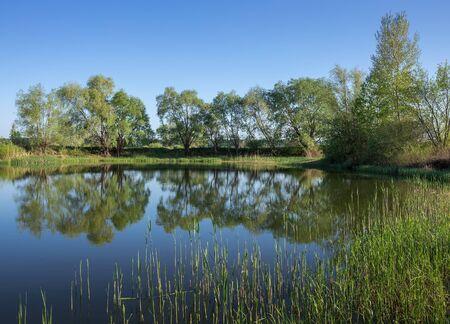 marshy: marshy lake in the countryside Stock Photo