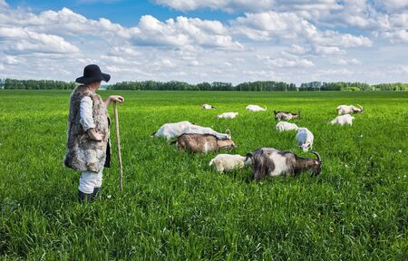 herdsman: Shepherd and herd of goats on a green pasture