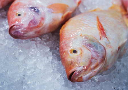 fishy: Marine fish on ice in the store Stock Photo