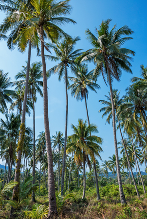 Palm grove in the tropics