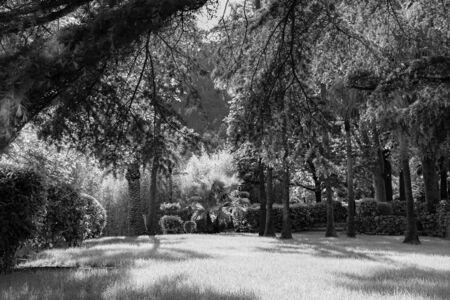 Picturesque summer landscape, green lawn in tropical garden