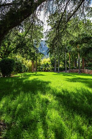 Picturesque summer landscape, green lawn in tropical garden