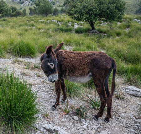 Sad donkey in the valley