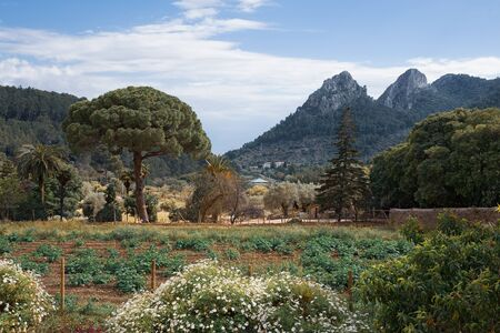 Alfabia Gardens park on Tramuntana mountain, Mallorca, Balearic Islands, Spain