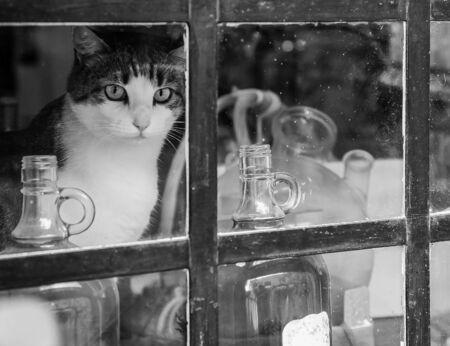 Cat on the windowsill in quarantine in the village 版權商用圖片