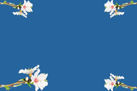 bourgeon: Frame with spring blossoming branch of white flowers on blue sky background