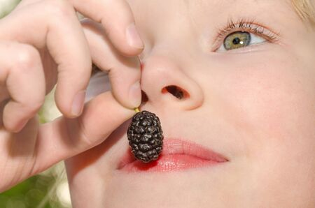 Little girl holding in hand and eating the mulberry fruit photo