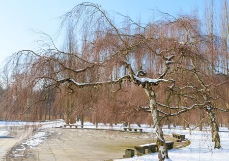 Winter park met berken bomen tegen de blauwe hemel