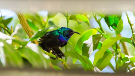 jingling: Little sunbird sitting on citrus tree through the window with louvers Stock Photo