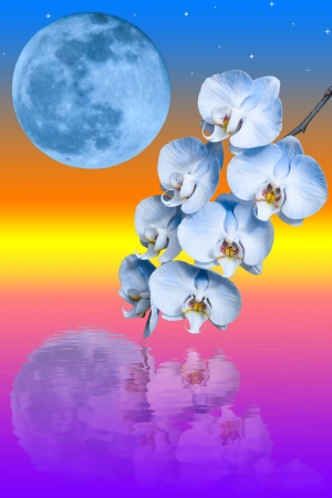 Branch of the blue orchid flower and big blue moon reflected in water against sunrise background Stock Photo