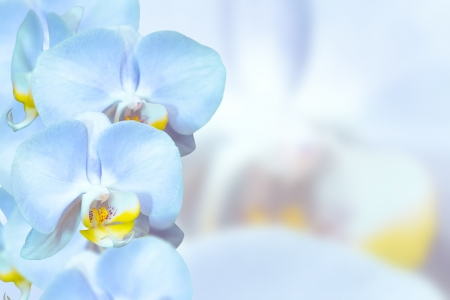 Romantic blue orchids flowers on pastel blurred background photo