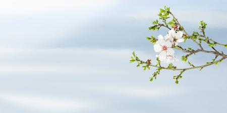 Spring bloeiende amandelboom tegen blauwe hemel met vrije plaats voor tekst