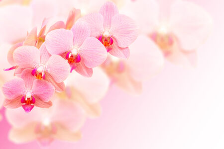 Exotic pink spotted orchid flowers on blurred background with free place for copy-space your text photo