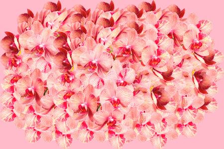 Zeer grote bos van gevlekte orchidee bloemen op roze achtergrond Stockfoto