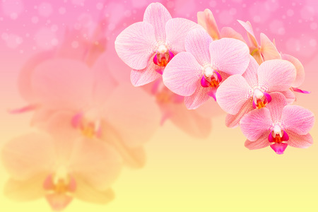 Romantic pink spotted orchid flowers on blured bokeh background with copy-space photo