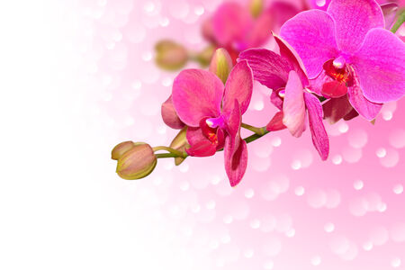 Exotic purple orchid flowers with buds on gradient and bokeh
