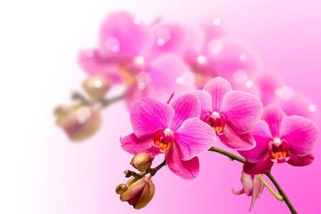 Romantic beautiful purple orchid flower on blurred bokeh background  photo