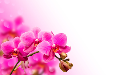 Branch of purple orchid flower on blurred bokeh background with free copyspace place photo