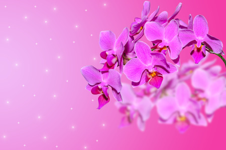 Branch of lilac orchid flowers on gradient blurred background with free area for your text photo