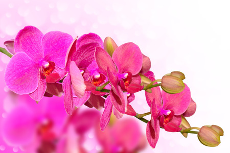 Big purple orchid flowers branch on blurred bokeh background with free copy-space place
