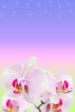 Gentle spotted orchids on blurred gradient background with copy-space area photo