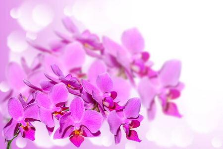 Exotic tropical violet orchid flowers on blurred gradient bokeh background photo