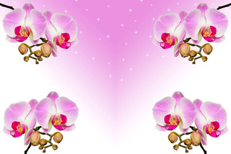 Branches of beautiful violet orchids on gradient background with copy-space Stock Photo