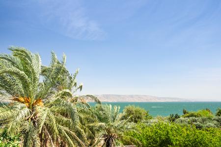 Dadelpalmen aan de oever van het meer Kinneret of Galilee zee met helder blauwe hemel