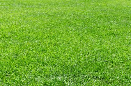 Zonlicht vers gras natuurlijke achtergrond met kopieer-ruimte en gratis tekst plaats