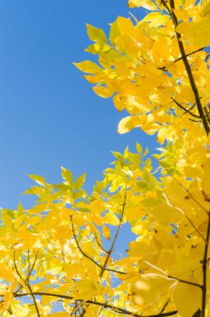Herfst achtergrond met gele bladeren over blauwe hemel. Verticale frame met gratis copyspace plaats voor uw tekst