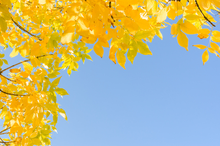 sky: Indian summer - gold yellow autumn leaves over clear blue sky. Frame background with corner and free copyspace place for text. Stock Photo