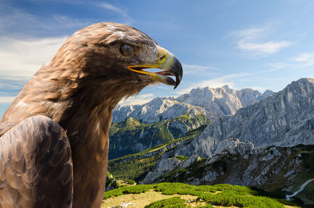Aerial view of Alps mountains landscape with golden eagle and free copyspace area photo