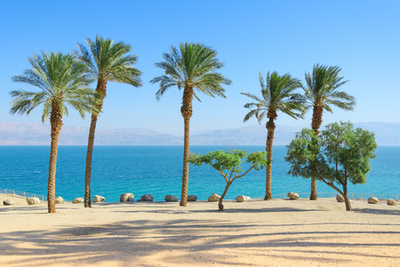 Vivid bright and vibrant saturated scenery of Dead Sea with palm trees on sunshine coast