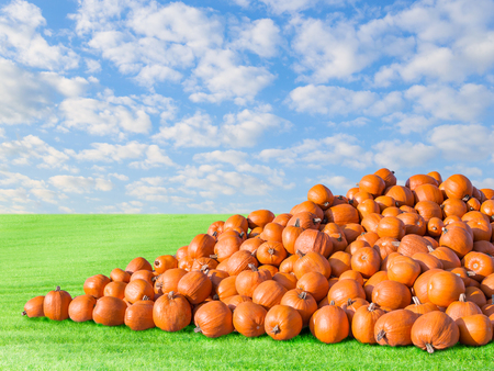 Pile of big orange natural rustic pumpkins harvest. Outdoors stock photo autumn rural scenery on pumpkin patch field with green fresh grass and blue cloudy sky. Stock Photo