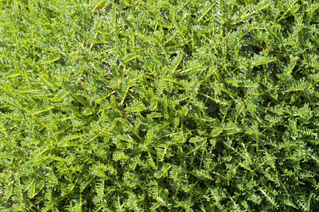 extreme close up: Exotic tropical moss background in sunny forest. Extreme close up stock photo.