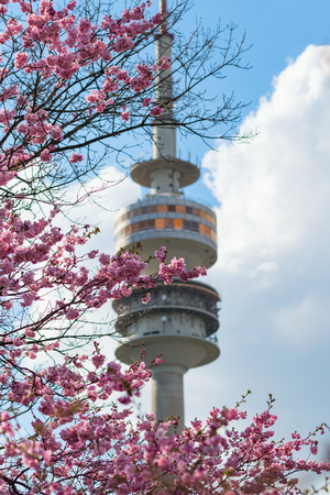 Highest observation point of Munich Radio-TV tower with revolving restaurant framed by spring blooming pink flowers
