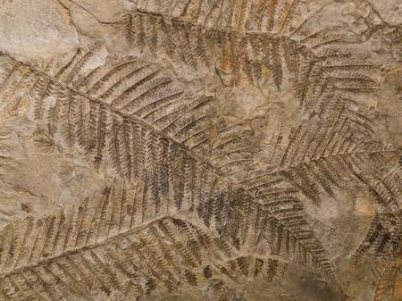 石化された先史的なシダは、植物の枝や葉を持つ石の上に刻印をフロンド 写真素材