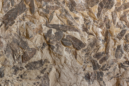 Background with Imprint of fossil prehistoric plant foliage on stone Standard-Bild - 94833798