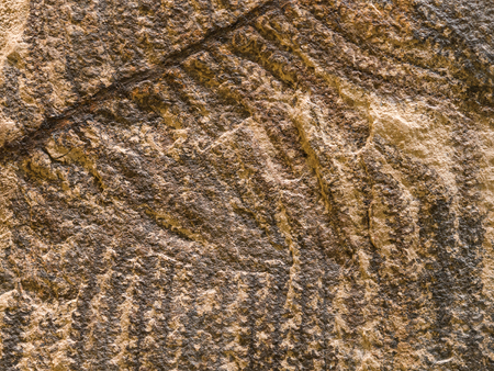Archaeological background with stone texture and petrified prehistorical ferns frond Standard-Bild - 95980675