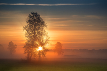 The first rays of the sun breaks through the branches of a tree at sunrise. Misty view at summer morning landscape in rural terrain.