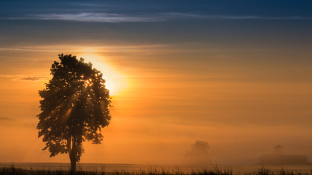 Panoramic morning scenery of sunrise over foggy meadow with sun rays breaking through branches of tree Standard-Bild