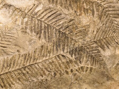Petrified prehistorical fronds of fern imprint on the stone with plants branches and foliage